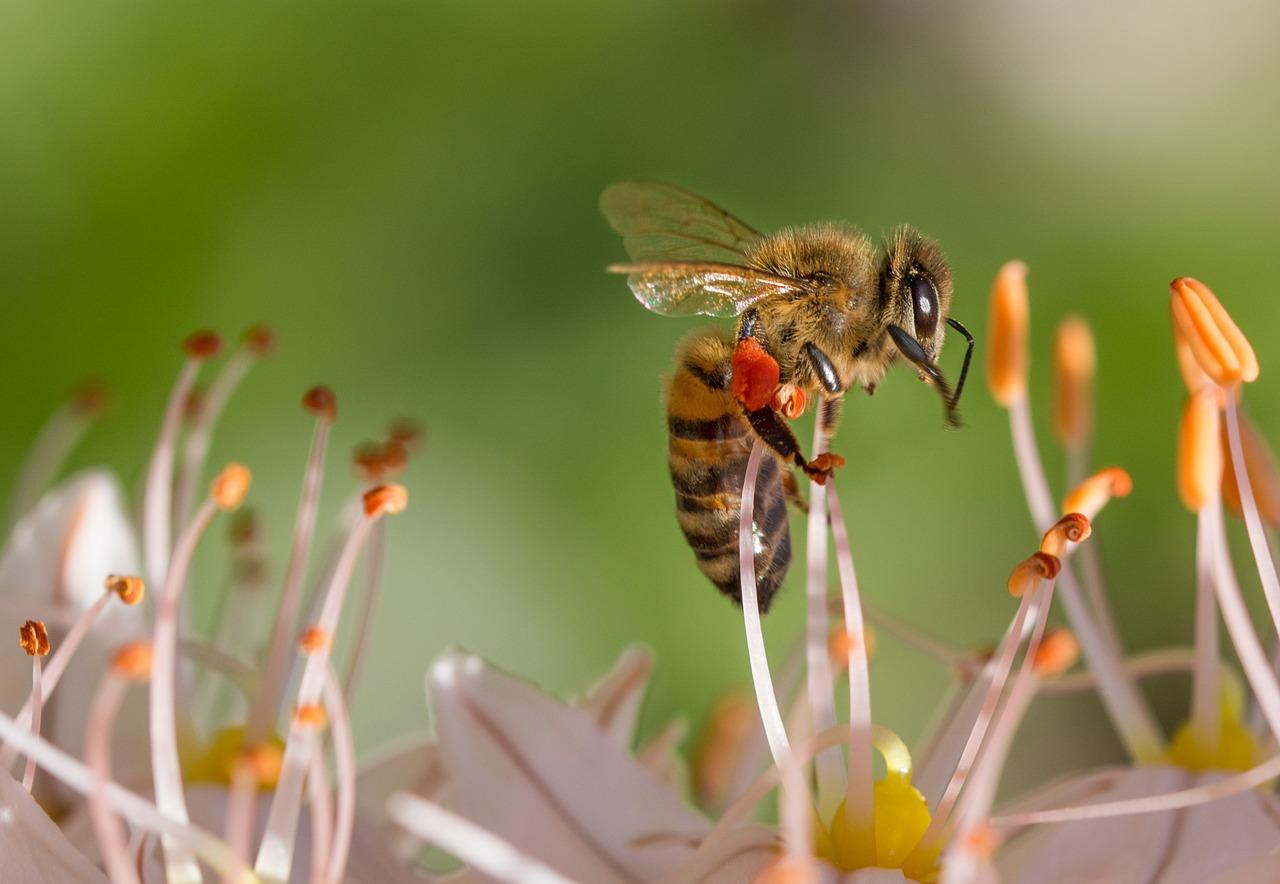 žuželka na cvetlici