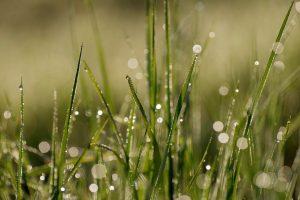 zalivanje trave