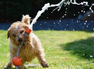 zalivanje vode kuža