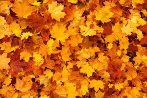 Listje jeseni
