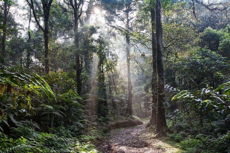 Deževni gozd