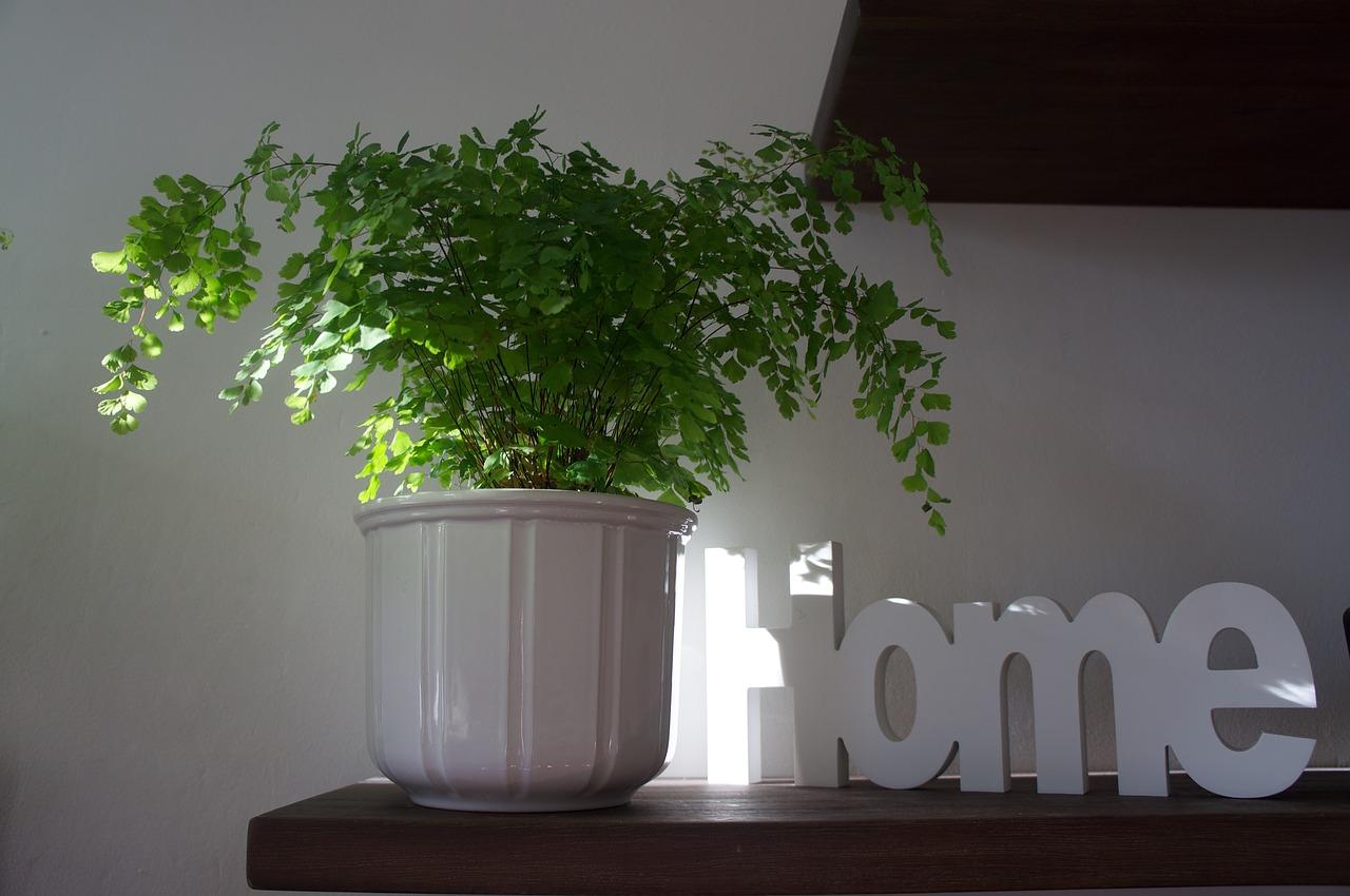 rastline doma