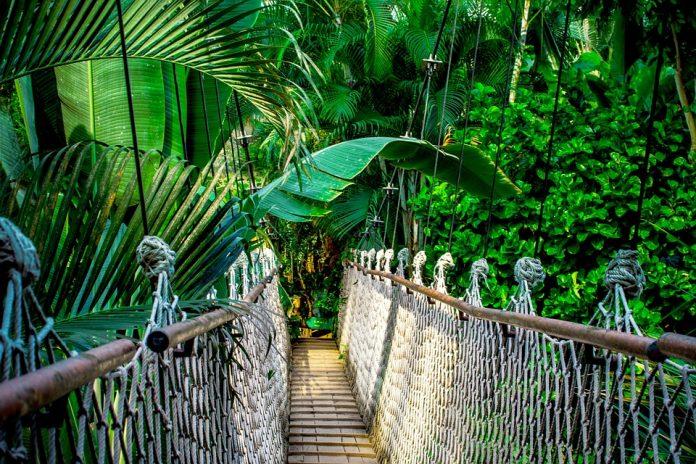 Viseči most v gozdu