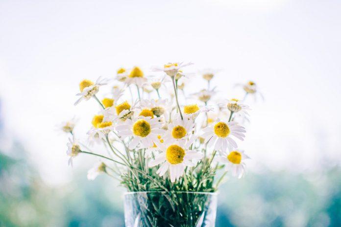 cvetje v vazi