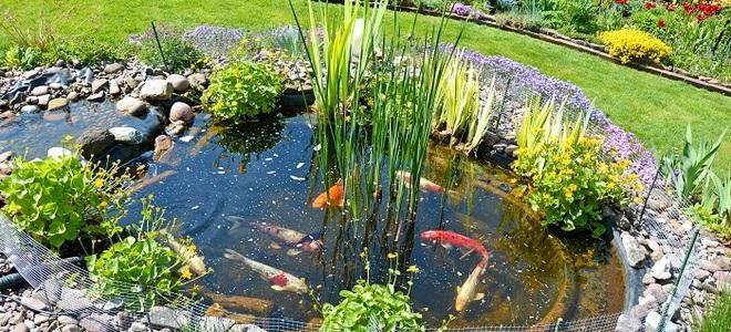 Primer zgrajenega ribnika