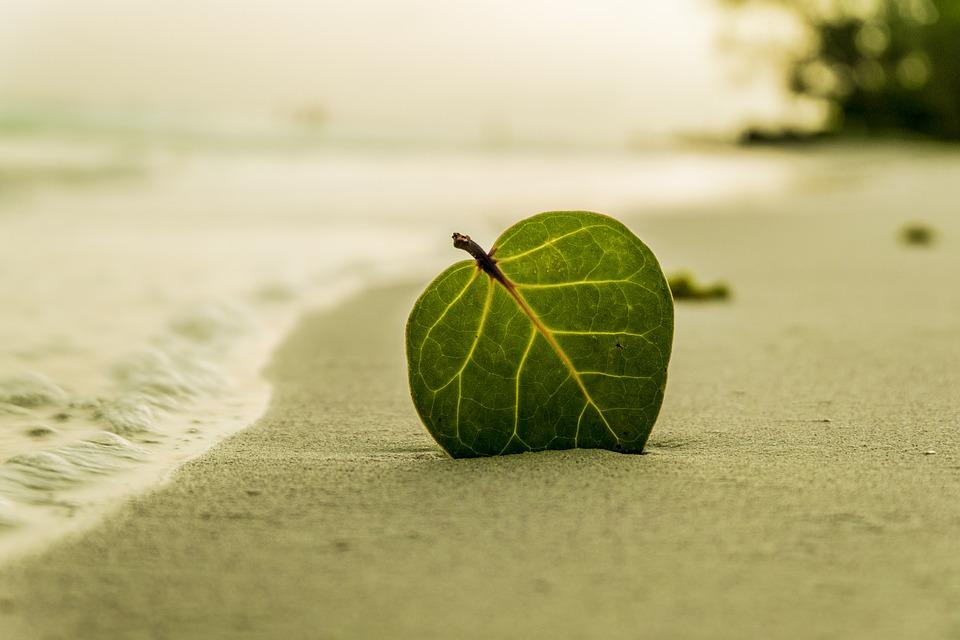 List na plaži