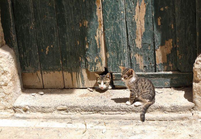Mačka kuka iz luknje v vratih