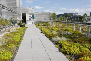 zelena streha Bauder