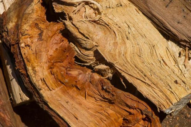 Napake v lesnih deblih