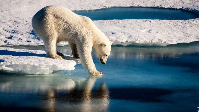 Arktični ocean