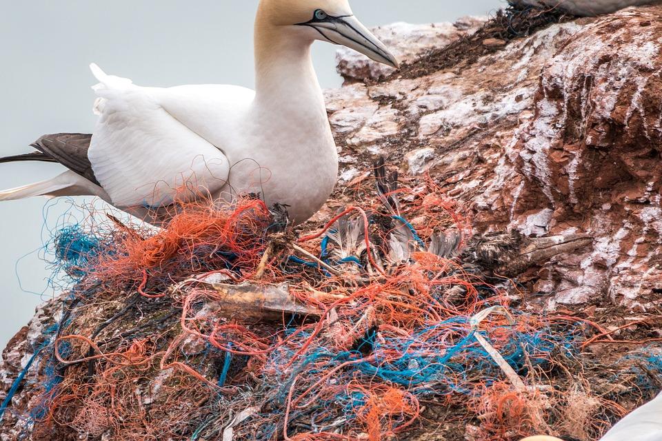 Ptič poleg množice plastičnih odpadkov, predvsem ribiških vrvi