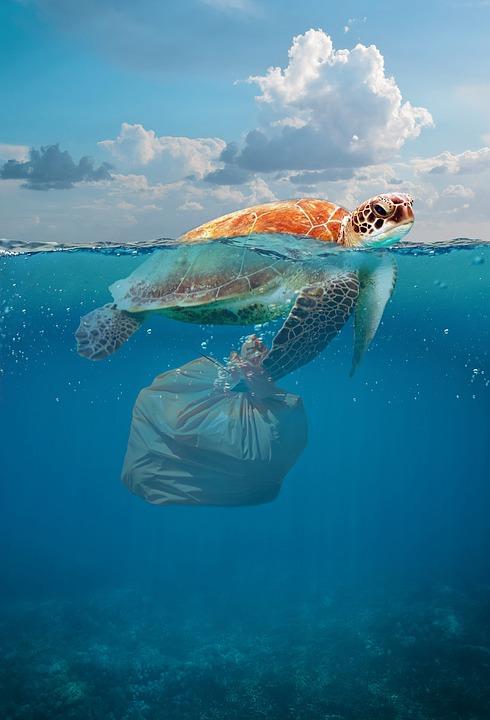 Želva, ki ima za nogo zataknjeno plastično vrečko