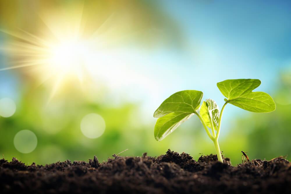Rastlina potrebuje Sonce