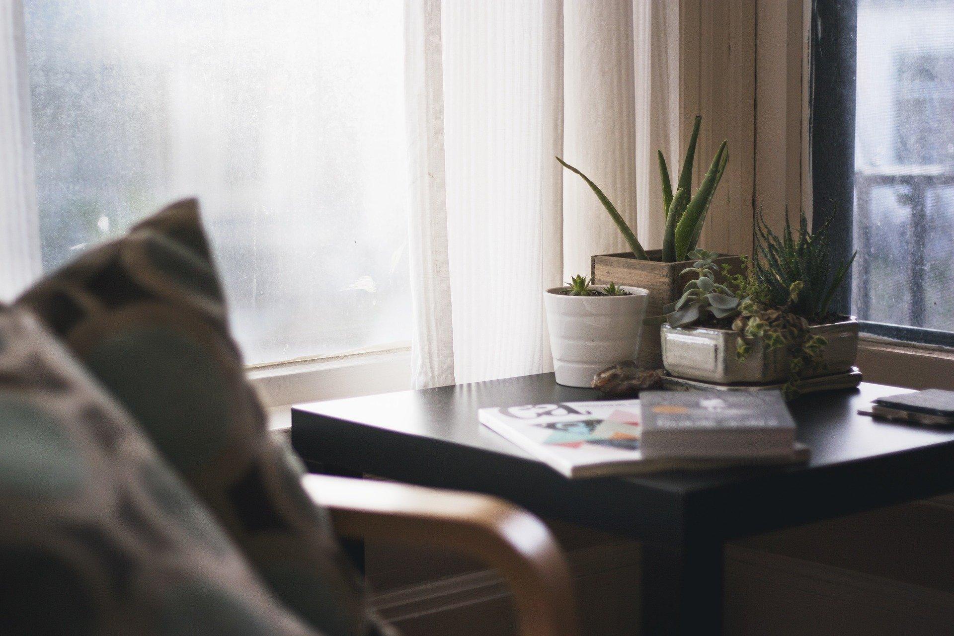 več sobnih rastlin na mizi