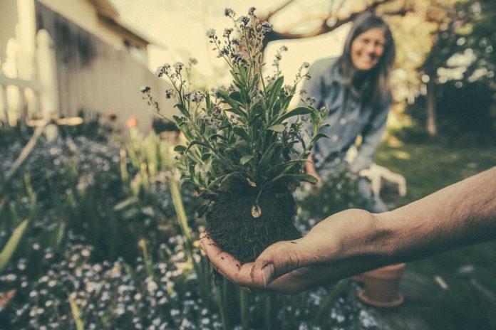 Roka drži sadiko rastline, v ozadju vrt in ženska, ki se smeji