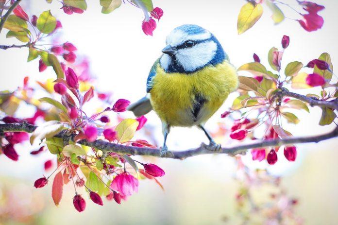 Ptica stoji na vejici