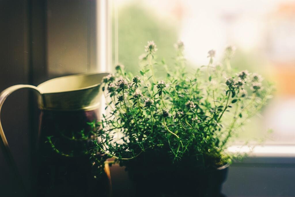 rastlina na okenski polici