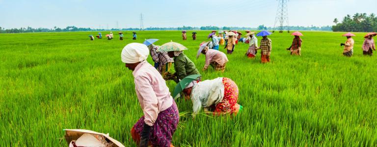Skrb za agrikulturno produktivnost mora biti visoko med prioritetami