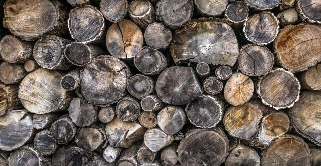Vlažna in gnila drva nam ne bodo v nikakršno pomoć