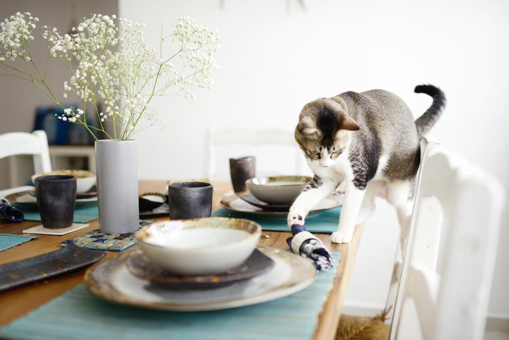 Prevračanje stvari z mize je pri mačkah zabavno opravilo
